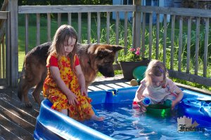 Read more about the article Dog Days of Summer