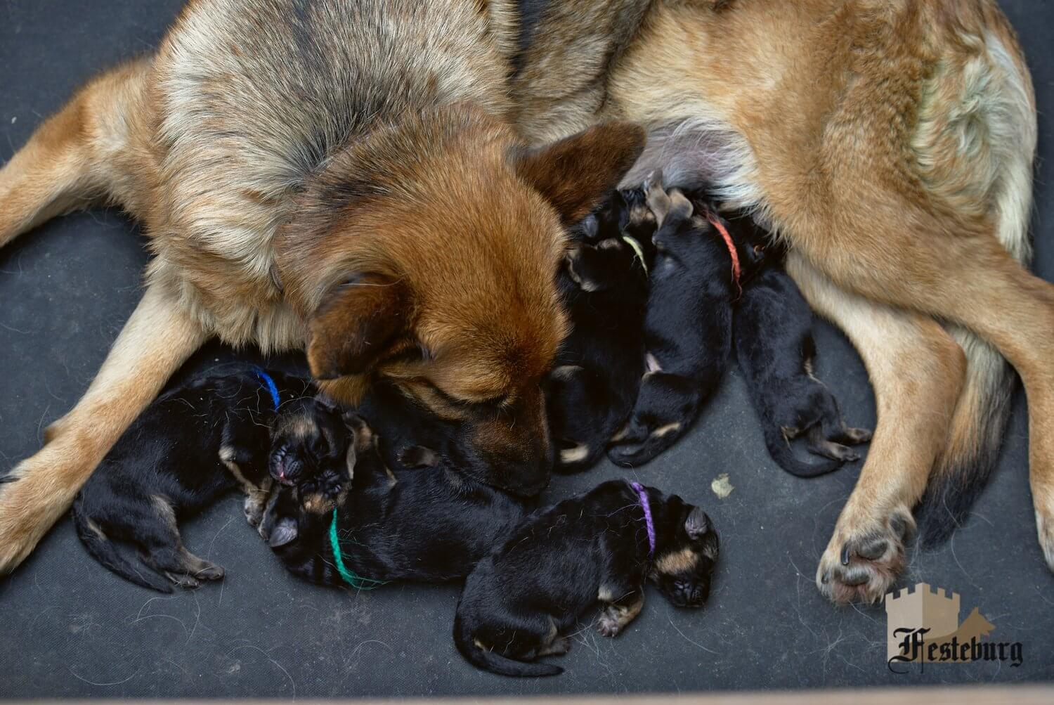 8 more puppies